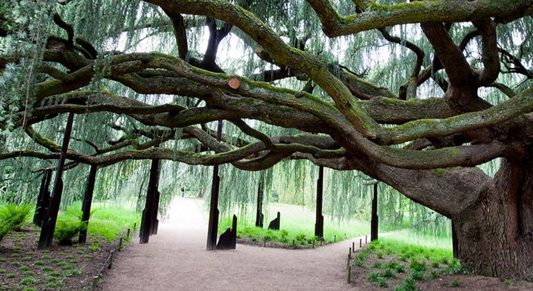 Visuel Arboretum